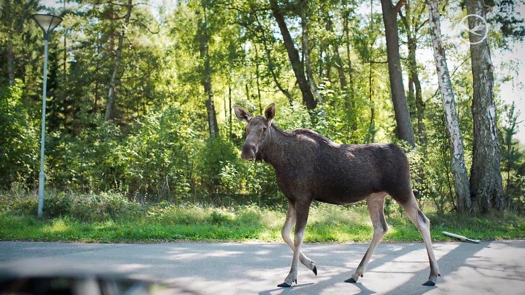 Lufthansa Magazin: Roadtrip Baltikum