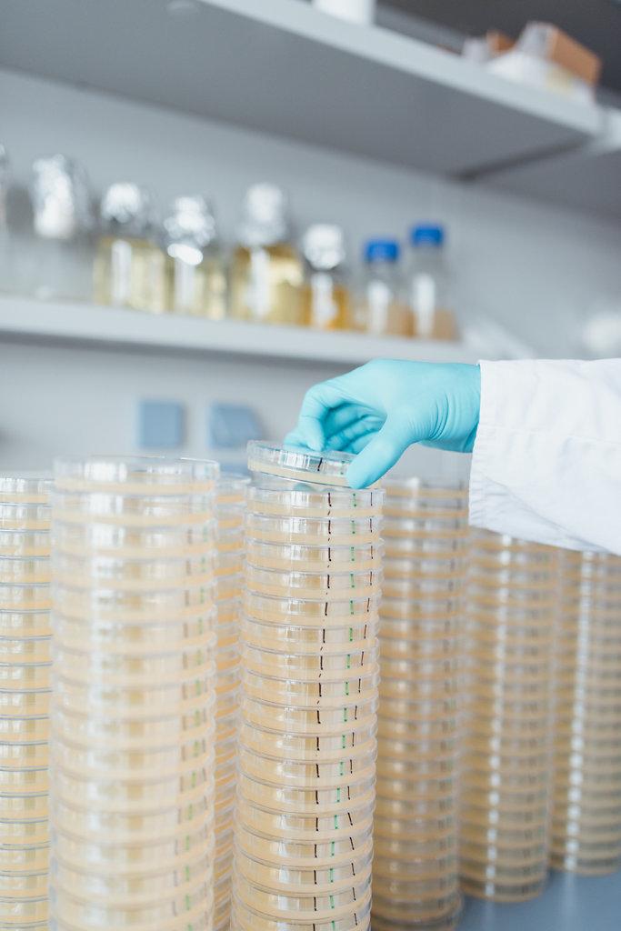 Eine Petrischale, auf der Bakterien und Bakteriophagen angesetzt werden.